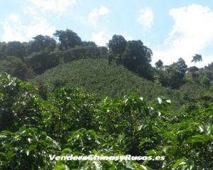 Продажа кофейной компании в Панаме (ферма, бренд, экспортер)